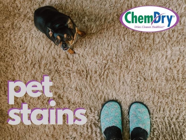 pet stain removal jacksonville